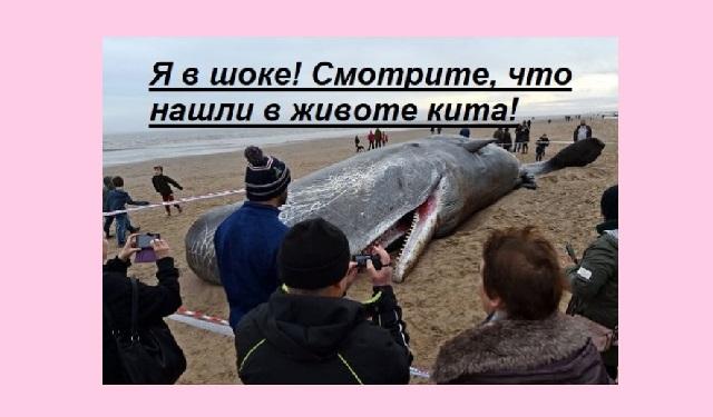Смотрите, что нашли в животе у кита! (видео)