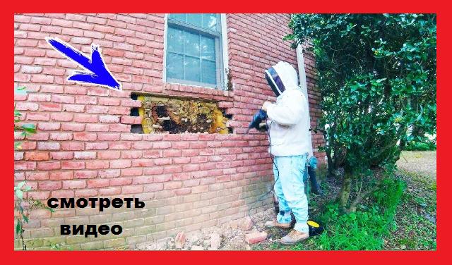 Люди обходили этот дом стороной. Когда спасатель вскрыл стену, все обомлели от удивления.